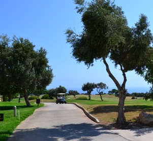 Olive trees in Cyprus